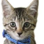 kitten-150x150