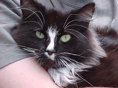 Miss Kitty2